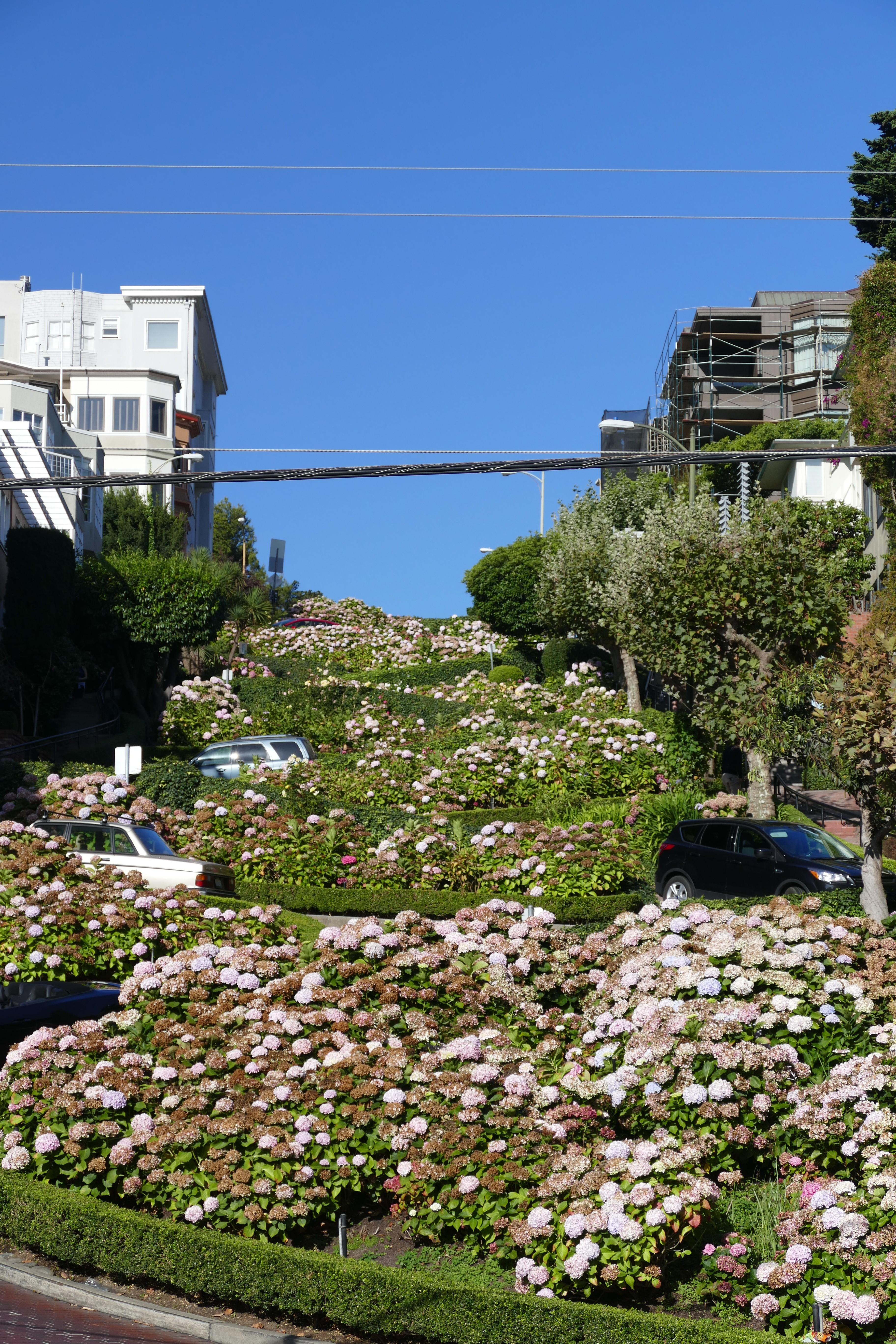 San Francisco + bezienswaardigheden en tips lombard street
