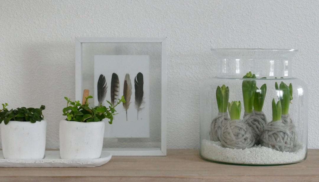 DIY bloembollen