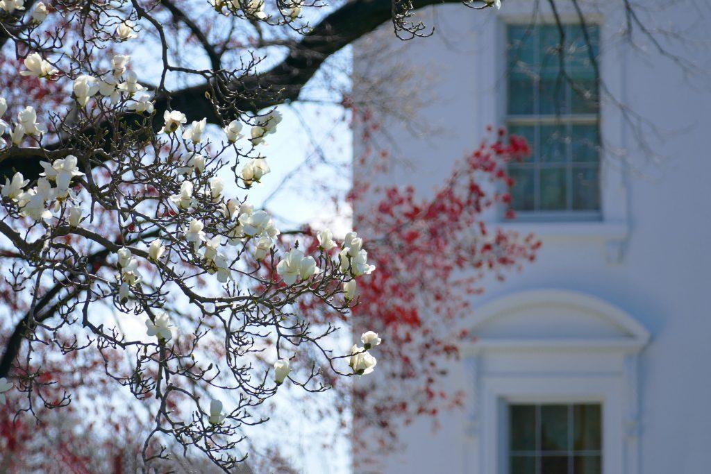 Washington White House 1