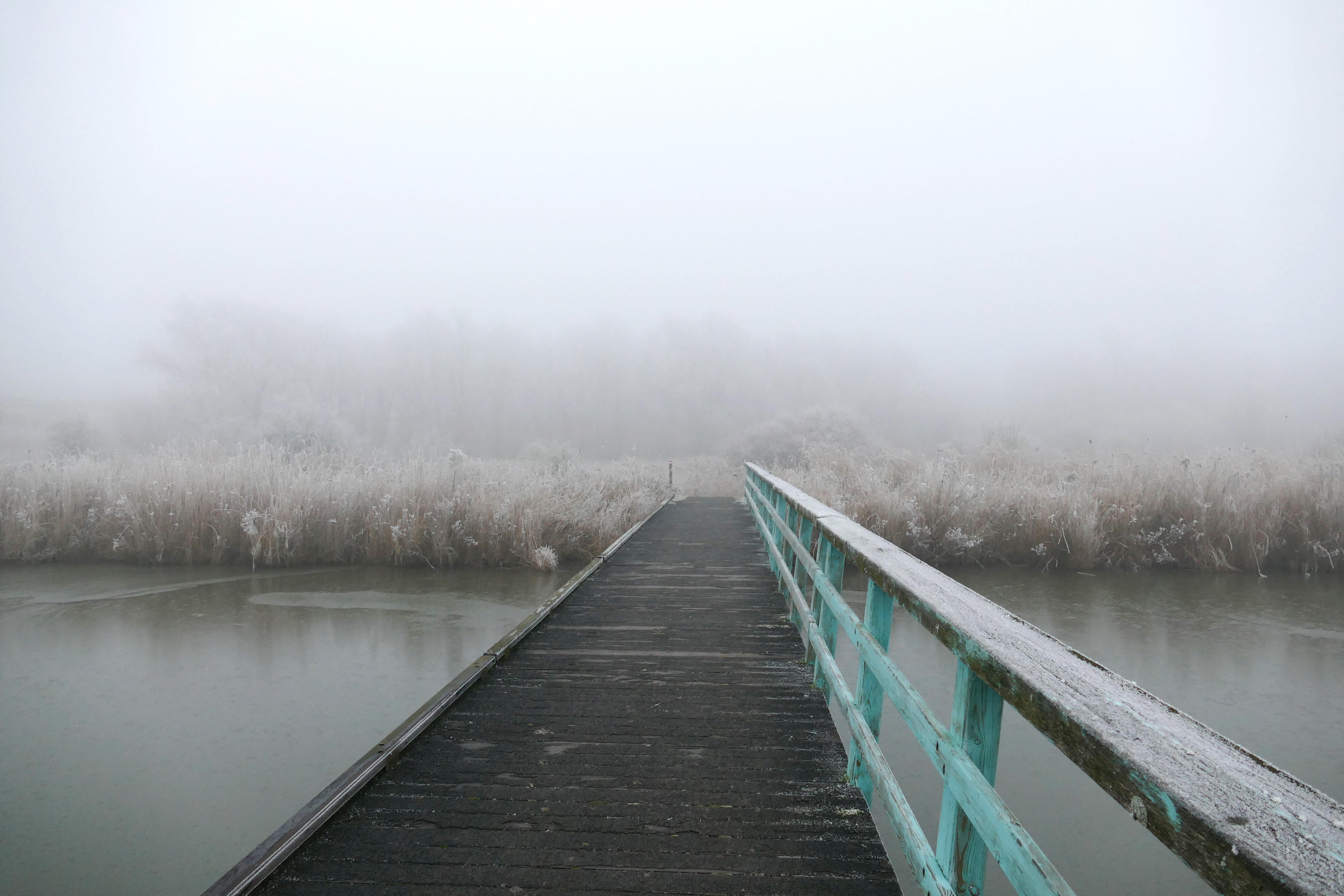 Oostvaardersplassen
