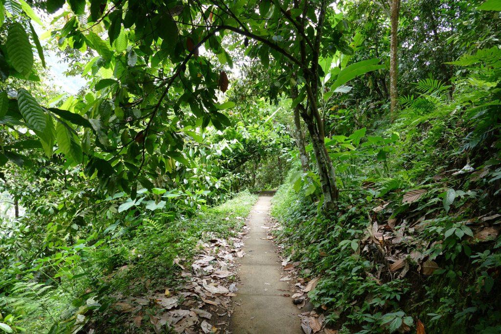 3x mijn favoriete wandelingen op Bali