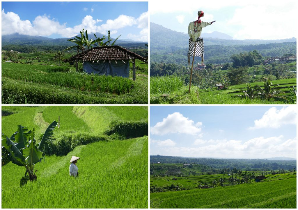mijn favoriete wandelingen op Bali9