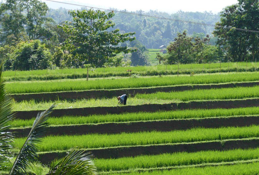 mijn favoriete wandelingen op Bali - Jatiluweh