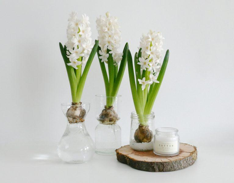 bloembollen in glazen potjes2