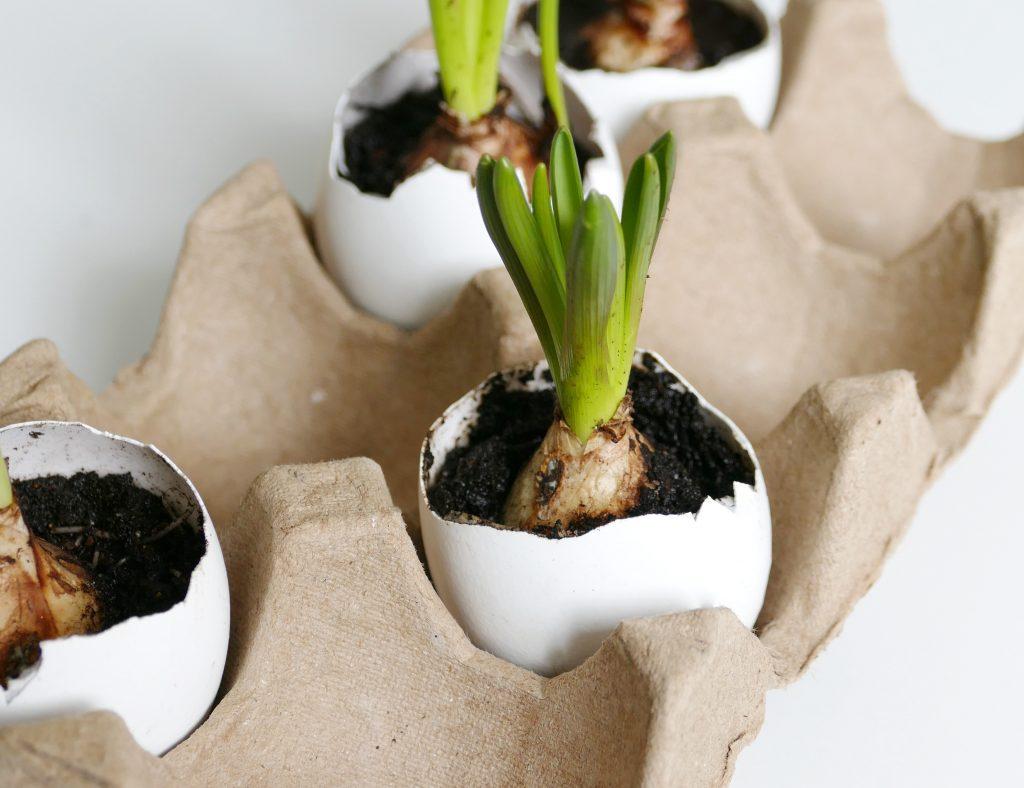 eierschalen als bloempotjes