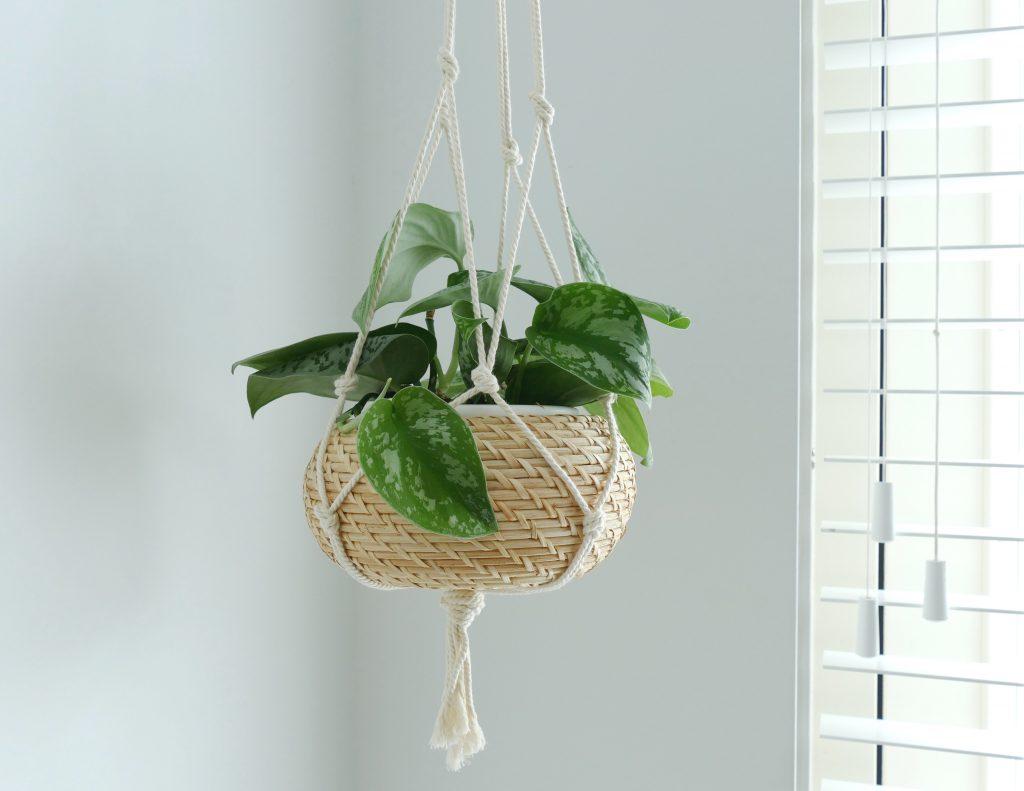 diy geknoopte plantenhanger