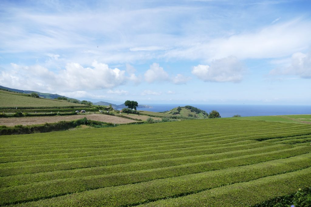 activiteiten die je niet mag overslaan op São Miguel: Proef een kopje thee op de enige theeplantage van Europa