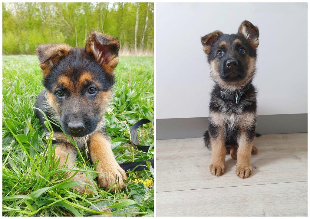 Persoonlijke update: heel veel puppy-geluk