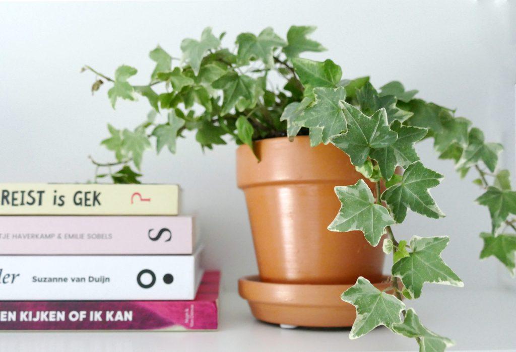 Nieuwe plantjes dankzij de Groene Kneusjes box