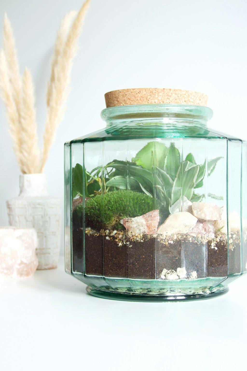 DIY: Zo maak je zelf een gesloten planten terrarium