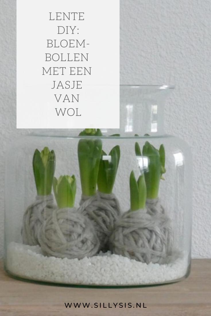 Bloembollen met een jasje van wol