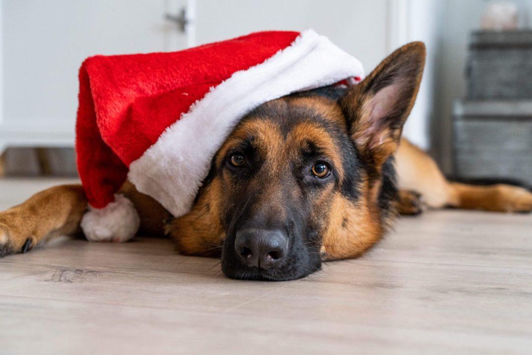 Mijn Kerst favorieten