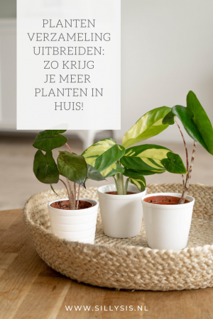 Je planten verzameling uitbreiden: Zo krijg je meer planten in huis!