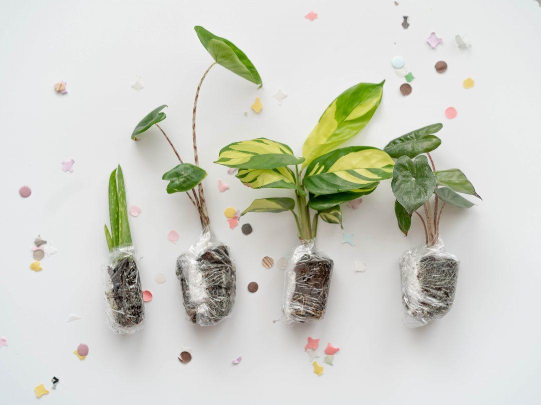 Planten verzameling uitbreiden: zo krijg je meer planten in huis