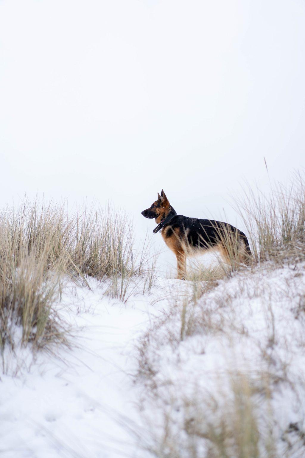 Terschelling in de sneeuw