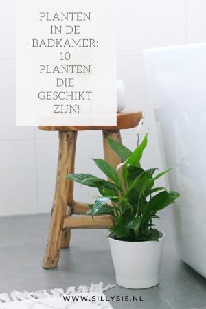 Planten in de badkamer: 10 planten die geschikt zijn!