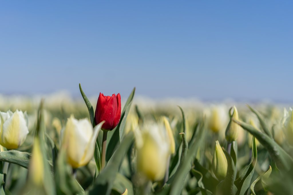 De lente is fijn