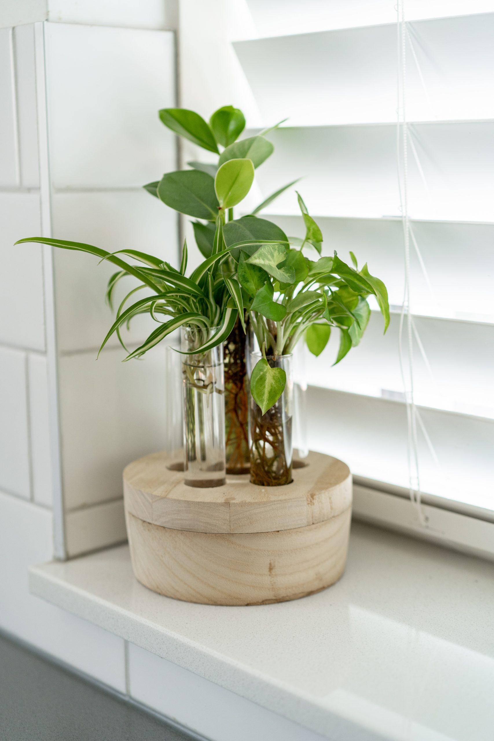 Decoreren met kamerplanten: 10 leuke interieur tips!